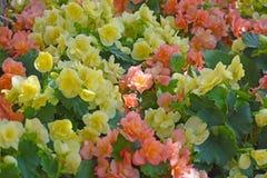 黄色和橙色花行  免版税图库摄影