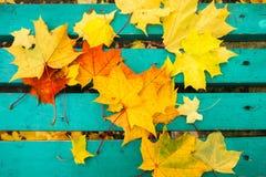 黄色和红槭在绿松石被绘的老长木凳离开在公园 免版税库存图片
