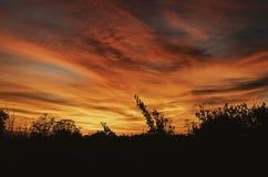 黄色和红色日落,树剪影,晚上 图库摄影