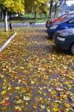 黄色和红色秋叶,下落在沥青和汽车 图库摄影