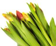 黄色和红色郁金香花花束  图库摄影