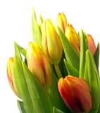 黄色和红色郁金香花花束  免版税图库摄影