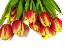 黄色和红色郁金香花花束  库存照片