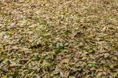 黄色和绿色下落的核桃叶子 库存照片