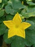 黄色和绿色花墙纸 免版税库存图片