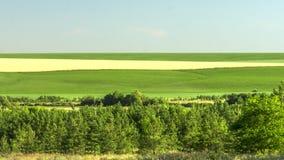 黄色和绿色领域的美丽的景色 种田的季节正起劲 股票视频