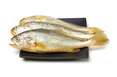 黄色哇哇叫的东西鱼 图库摄影