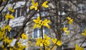 黄色在树的分支离开 免版税库存图片