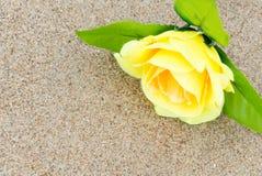 黄色在海滩沙子背景的玫瑰花  库存照片