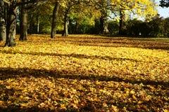 黄色在秋天离开在公园在一个晴天 免版税库存图片