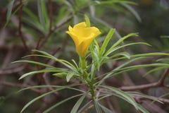 黄色在自然的颜色美丽的花 库存照片