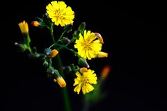 黄色在黑暗中 库存图片