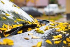 黄色在黑汽车敞篷的下落的叶子 免版税图库摄影