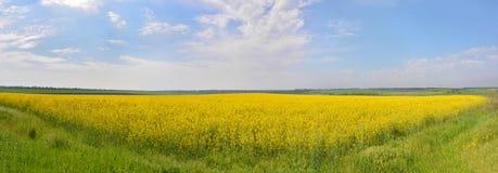 黄色地毯 免版税图库摄影