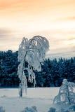 黄色夜间天空的美丽的结霜的结构树 免版税库存照片