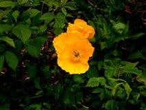 黄色太阳和黄色花、绿色树和叶子 库存照片