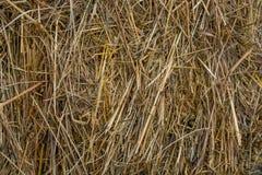黄色干燥干草特写镜头 图库摄影