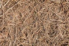 黄色干草顶视图在地面的 自然纹理背景 库存图片