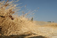黄色干草, 免版税库存图片