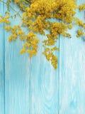 黄色开花开花在蓝色木背景的秋天框架减速火箭的季节装饰 图库摄影