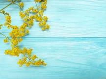 黄色开花开花在蓝色木背景的秋天框架减速火箭的装饰 免版税库存图片