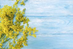 黄色开花开花在蓝色木背景的秋天框架减速火箭的边界季节装饰 库存图片