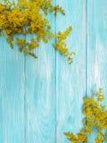 黄色开花开花在蓝色木背景的秋天框架花卉减速火箭的装饰 免版税库存照片
