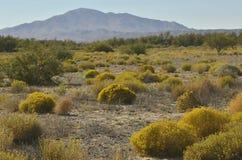 黄色开花的沙漠植物和山风景 图库摄影