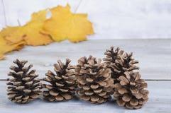 黄色或红色离开与杉木锥体在与老葡萄酒书的白色木难看的东西背景 图库摄影