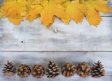 黄色或红色离开与杉木锥体在与老葡萄酒书的白色木难看的东西背景 免版税图库摄影