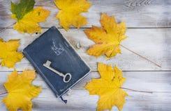 黄色或红色离开与杉木锥体在与老葡萄酒书的白色木难看的东西背景 库存照片