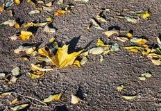 黄色抽象背景在地面上离开 免版税库存图片