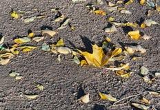 黄色抽象背景在地面上离开 库存照片