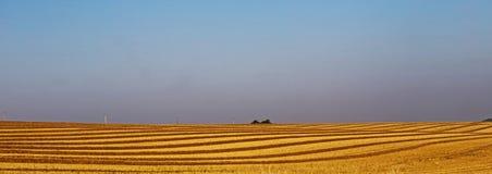 黄色收获了麦田 免版税库存照片