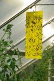 黄色昆虫棍子 免版税库存图片