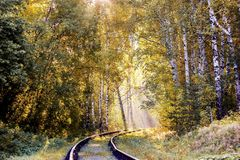 黄色明亮的叶子在阳光下 金黄秋天 太阳的光芒在叶子落 花揪五颜六色的叶子  免版税库存照片
