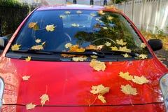 黄色枫叶在红色汽车说谎 图库摄影