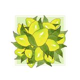 黄色柠檬果子花束与在美好的样式的白色背景隔绝的绿色叶子的 水彩图画柑桔 向量例证