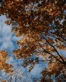 黄色树叶子秋天机盖在秋天的 免版税库存照片