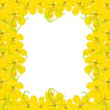 黄色桂皮瘘-在白色背景的金黄阵雨花与拷贝空间 也corel凹道例证向量 免版税库存图片