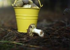 黄色桶用可食的蘑菇 免版税库存照片