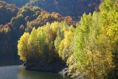 黄色森林在秋天 库存照片