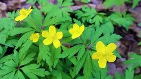黄色森林花特写镜头