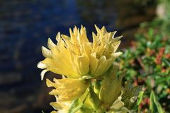 黄色植物花 图库摄影