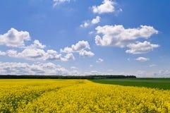 黄色油菜籽领域和绿色麦田在蓝色sk下的 免版税库存图片