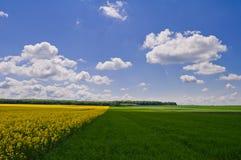 黄色油菜籽领域和绿色麦田在蓝色sk下的 免版税图库摄影