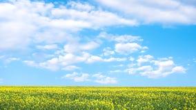 黄色油菜籽领域和蓝天与云彩在一个晴天 库存图片