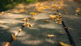 黄色烘干在一张老木桌上的叶子 黄色离开反对绿色树背景  影视素材