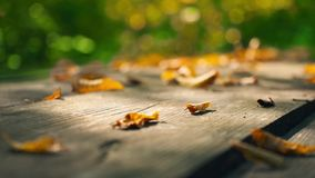 黄色烘干在一张老木桌上的叶子 黄色离开反对绿色树背景  股票录像