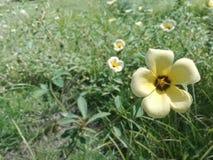 黄色热带花在庭院里 免版税库存照片